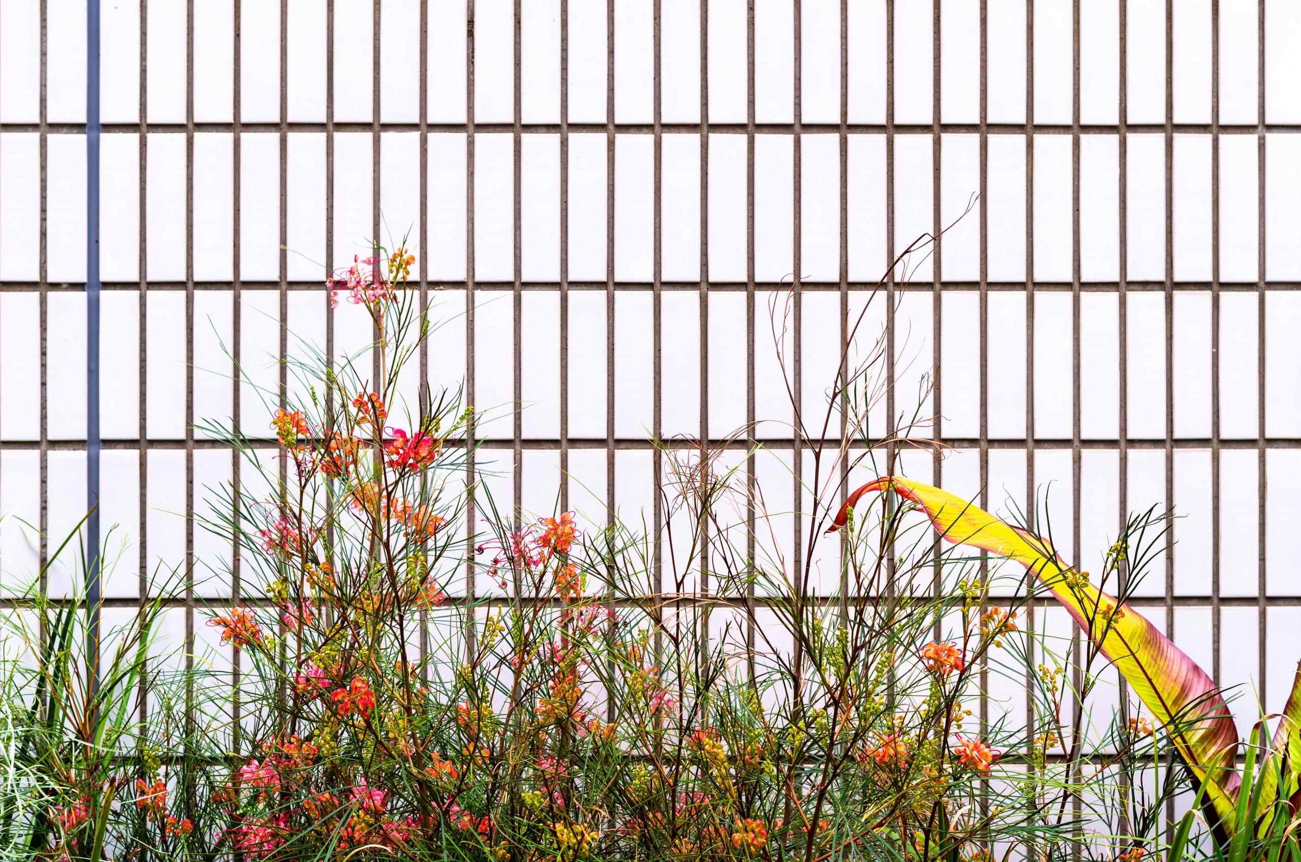 GREENS around THE CAMPUS #02   春を彩るランドスケープ THE CAMPUS ようこそ、みんなのワーク&ライフ開放区へ
